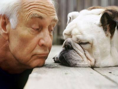 Funny-Bulldog-Man-Wallpaper