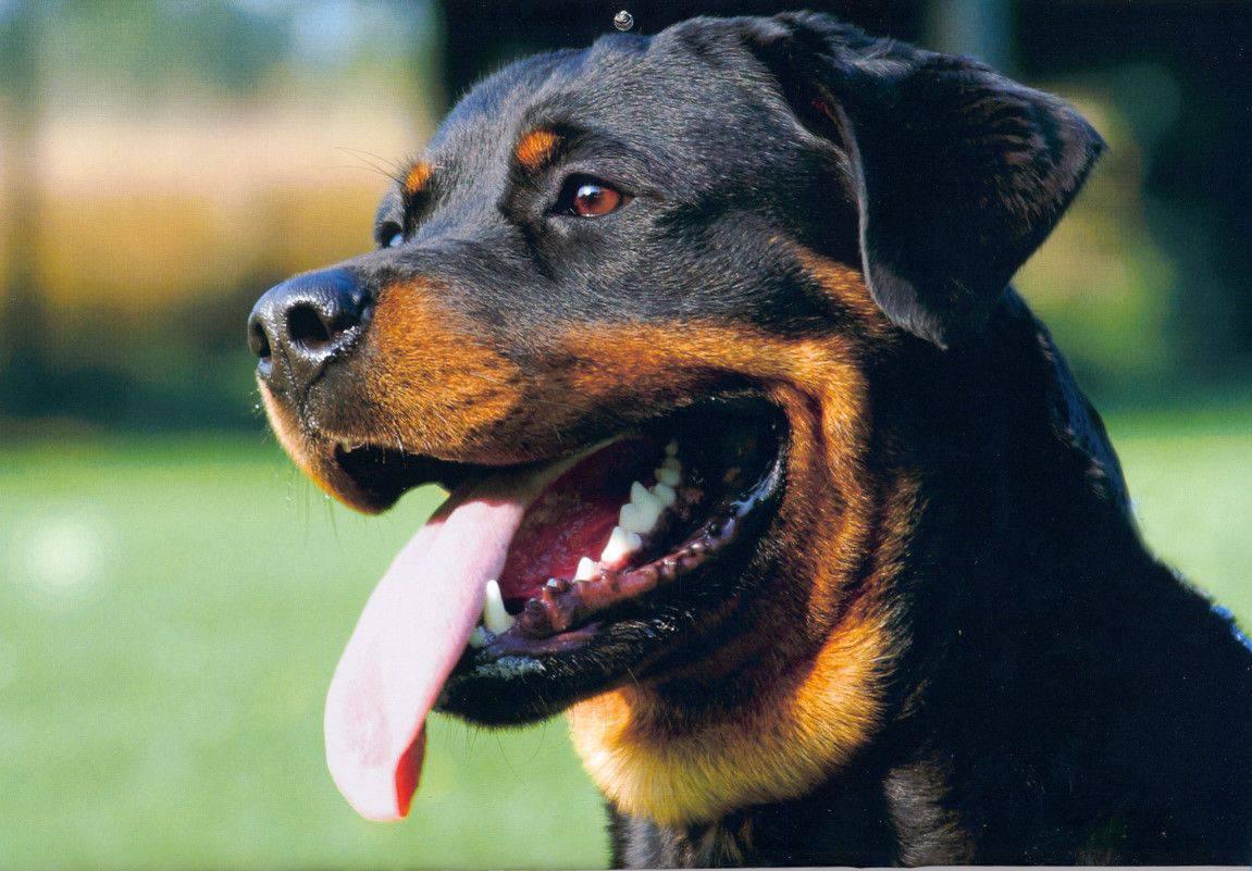 aggressione cani