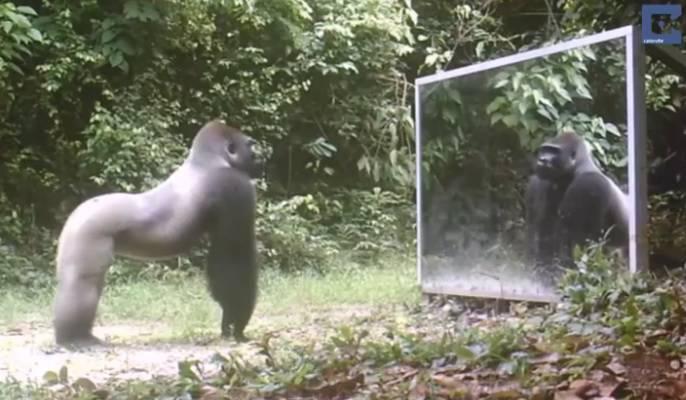 Gli animali della giungla davanti ad uno specchio video for Come costruire una palestra nella giungla
