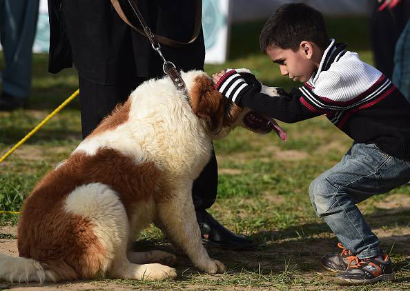 "A Pakistani boy pats his dog at a ""Dog and Pet Gala"" in Islamabad on April 5, 2015. The shows was organised by Pet Lovers Club Pakistan in collaboration with the Anti-Narcotics Force (ANF) awareness campaign against drug use. AFP PHOTO / Farooq NAEEM (Photo credit should read FAROOQ NAEEM/AFP/Getty Images)"