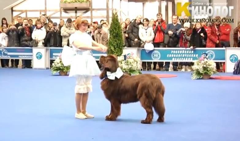 cane ballo