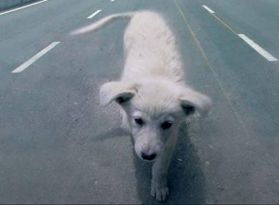 cane-che-attraversa-autostrada-1024x941