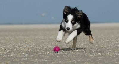 cane palla1