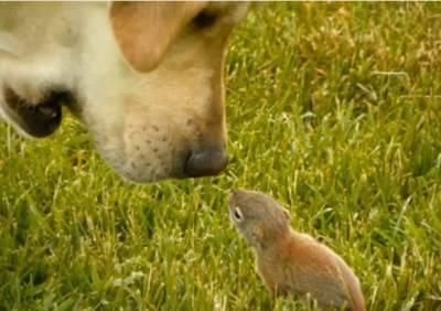cane scoiattolo
