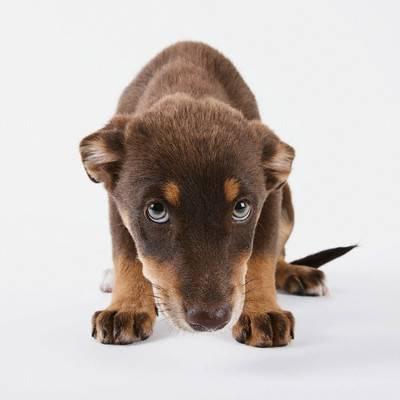 Sad Puppy --- Image by © Michael Kloth/Corbis