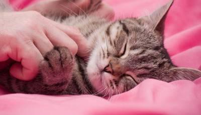 carezze gatto