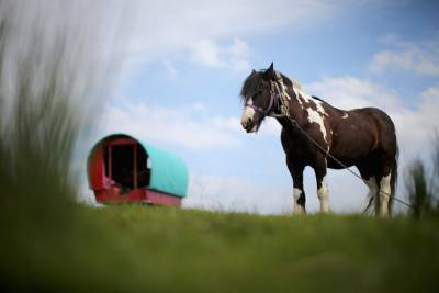 APPLEBY, ENGLAND - JUNE 04:  Traditional romany caravans camp on Fair Hill during the Appleby Horse Fair on June 4, 2015 in Appleby, England. The Appleby Horse Fair has existed under the protection of a charter granted by James II since 1685 and is one of the key gathering points for the Romany, gypsy and traveling community. The fair is attended by about 5,000 travellers who come to buy and sell horses. The animals are washed and groomed before being ridden at high speed along the 'mad mile' for the viewing of potential buyers.  (Photo by Christopher Furlong/Getty Images)