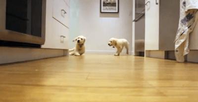 cuccioli2