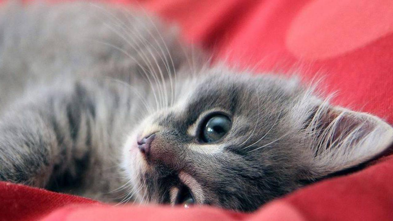 come capire se i gatti hanno i vermi