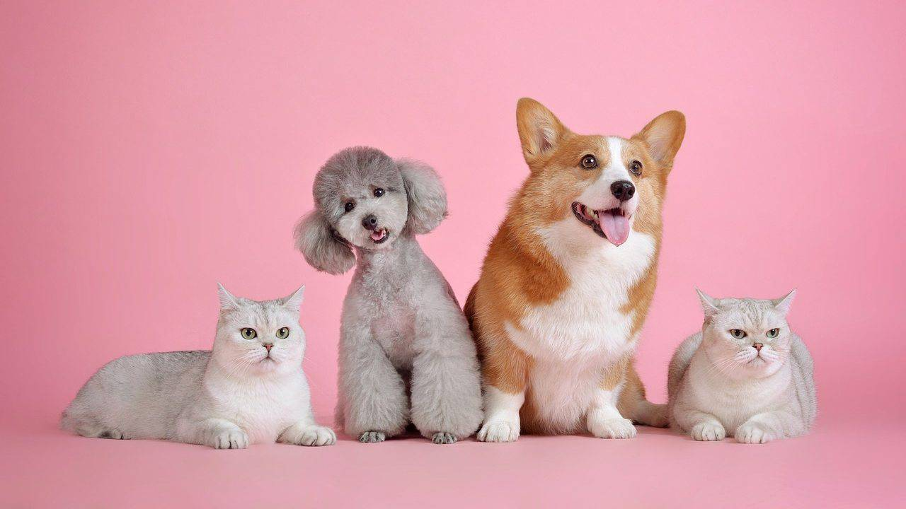 dieta per cani e gatti