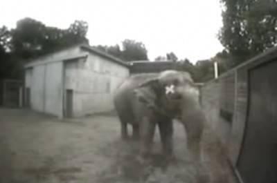 elefante allo specchio