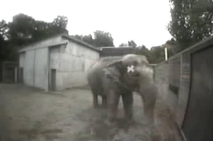 Gli animali hanno una coscienza di s - Cavalli allo specchio ...