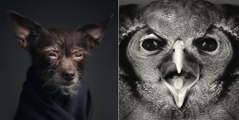 Gli animali umani agli scatti del fotografo lagrange