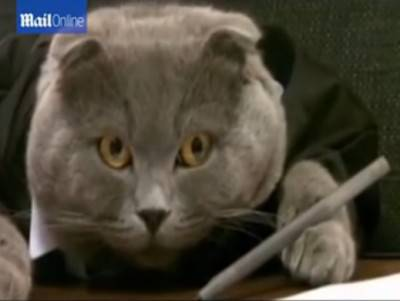 gatto bucarest