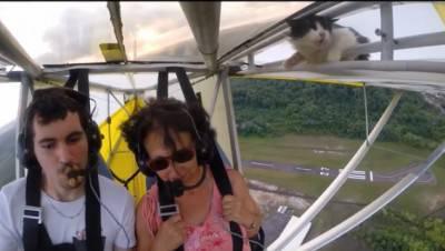gatto volo