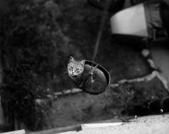 I Gatti In Bianco E Nero