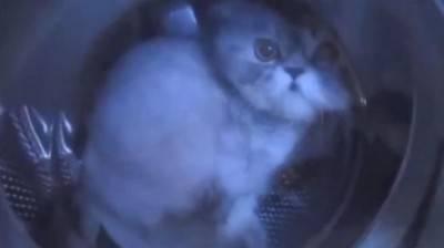 gattol