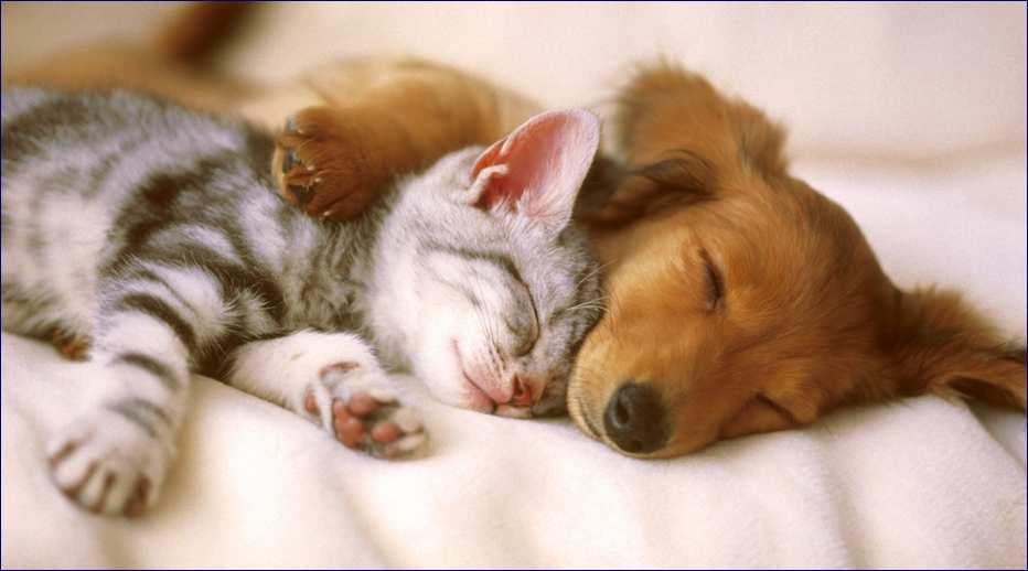 Secondo uno studio giapponese cani e gatti ugualmente intelligenti