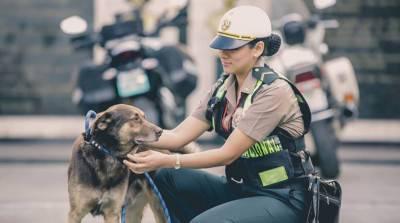 orejitas-agenti per cani