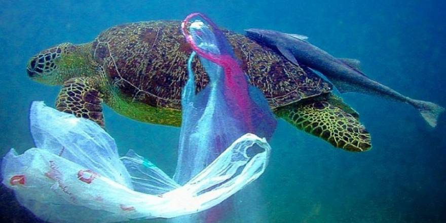 Salvate due tartarughe marine imprigionate nella plastica for Tartarughe razze