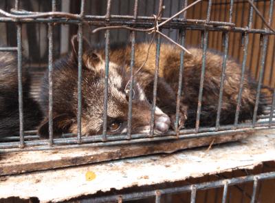 animali maltrattamentij