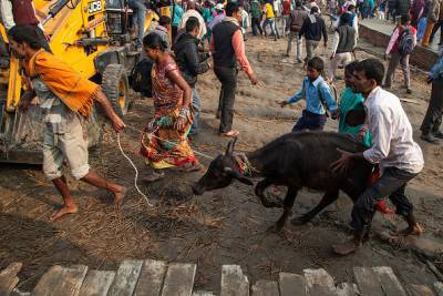 Hindus Gather To Perform Controversial Gadhimai Festival Sacrifice