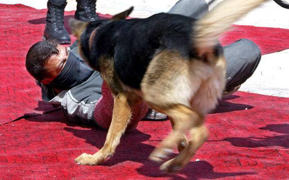 A German Shepard dog attacks a police pl