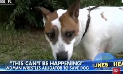 cane alligatore