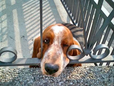 cane balcone