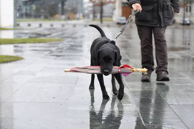 GERMANY-ANIMALS-DOG-WEATHER-FEATURE