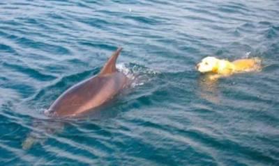 cane delfino