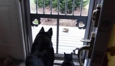 cane-gatto-scoiattolo