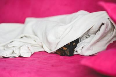 cane letto