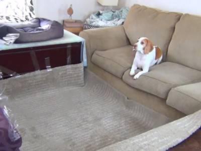 cane sorpresa