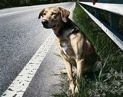 cane strada