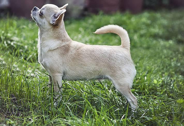 cane msarrito