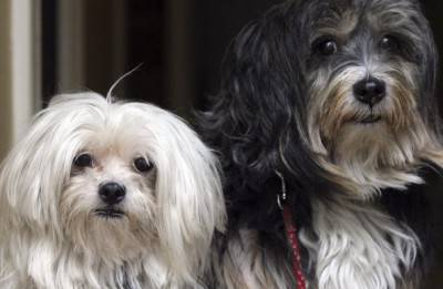 New Laws For Pet Welfare To Come Into Force