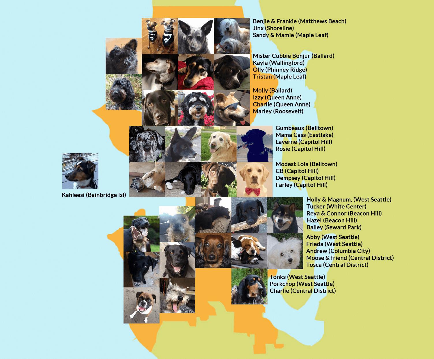 I nomi pi diffusi per gli animali domestici for Nomi per cani maschi piccoli