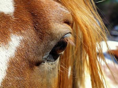 cavallo3