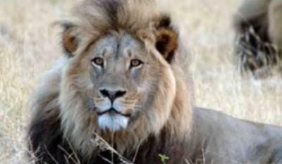cecil leone