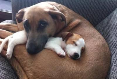 cuccioli e adulti2