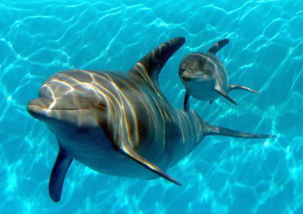 i delfini imparano l'inglese