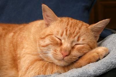 dormire gatto