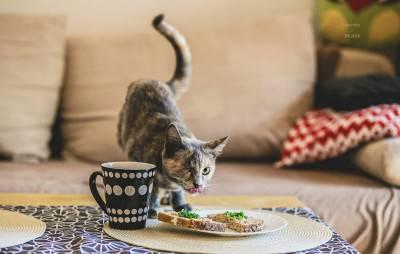 gatti handicap -amber
