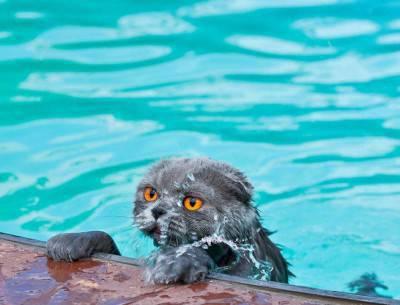 gatto acqua2