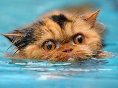 gatto acqua4