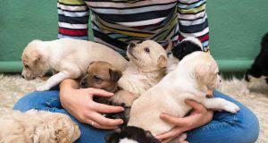 cuccioli di cane