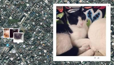 mappa gatti