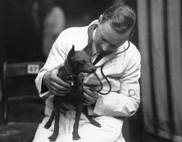 veterinari del primo 900