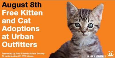 adozione gatti